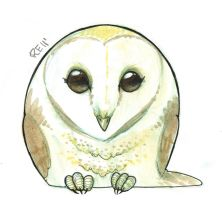 Barn Owl by RErrede