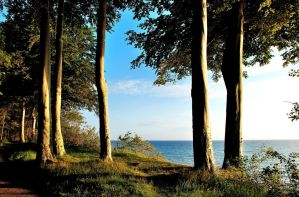 Beech-trees on Baltic Sea cliff by jchanders