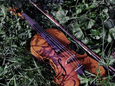 my violin by leoEye
