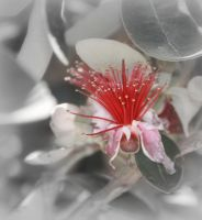 Guava Bloom by creativemikey