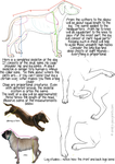 Dog proportions tutorial by dalmatianluver