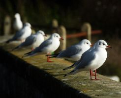 gulls will be gulls by awjay