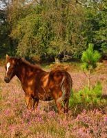 forest foal 2 by smevstock
