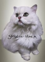 White Cat_cutout_1 by GoblinStock