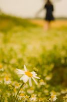 Follow the Daisies by Nokixel