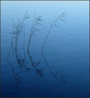 Again some reeds by jchanders
