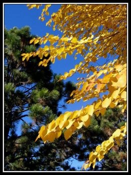 Gold Green Blue by midgard