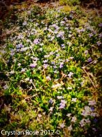 Skeptic Grassy Flowers by cryas