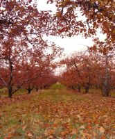 Autumn Orchard Stock 10 by SimplyBackgrounds