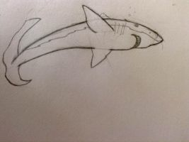 Great White Traditional Sketch by TwilightAlicorn