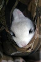 This is a Bunny in a Pocket! Part Two. by Karleyy