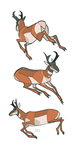 Studies - Pronghorn by oxboxer