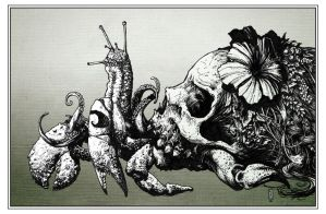 Skull Crab 001 by Scratch1313