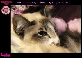 ANCATS~Australian National Cat Alliance Inc by RivieraVisual