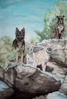 dogs on the rocks by DaphneBlake