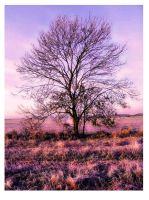 Tree in Winter by silxy