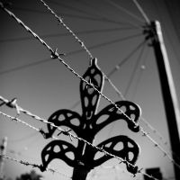 The Fence by jaismith