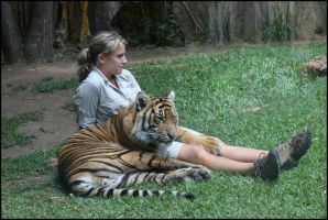 Bengal Tiger And Friend. by Firey-Sunset