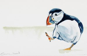Puffin for Janet by emmawood
