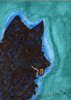 Rocky ACEO by WildGriffin