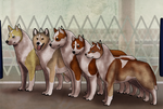 Fifty Shades of Gold - Breeding Class @ Mush by ZyathEstate