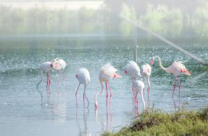 Busy Flamingos by bee-eye