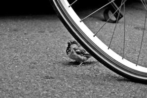 This is MY bike! by schwarzdrossel