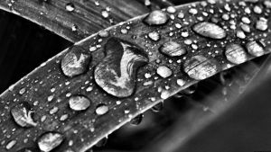 Water Drops Wallpaper Wide by JonathanHasenfus