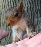 Baby squirrel 1 by thepinupgirl