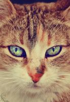 The evil eye... by Andrea-Deah