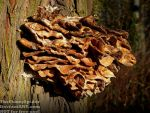 Big Bunch of tree mushrooms by TheFunnySpider