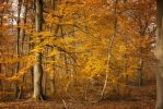 Automne-16 by Fred93