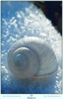 Snail-Shell by LilyStox
