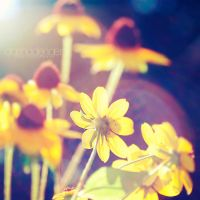 Let the sunshine in by onixa