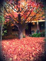 Autumn leaves by Who-i-am-4lyf