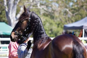 STOCK Canungra Show 2013-208 by fillyrox