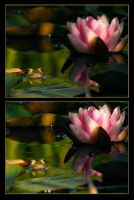 The frog and the flower by hamti