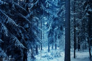Winter in Narnia by AljoschaThielen