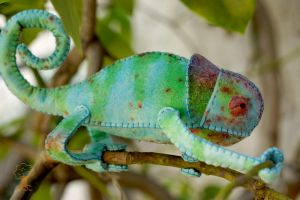 Custom Painted Chameleon 5 by quirkandbramble