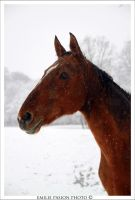 Snow Horse by Emilie25