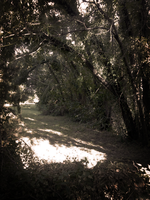 Shaded Path by Draco-McWherter