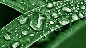 Water Drops Wallpaper Green by JonathanHasenfus