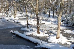 Icy Swamp with Snow by happeningstock