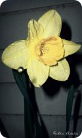 Water drop yellow by KristineAdelia