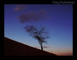 The Tree by Gregsters