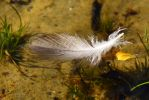 Closeup floating feather by MarieLoup