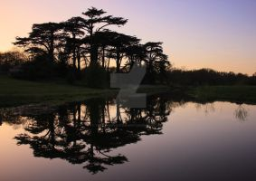 Reflection Of Tree Silhouettes by twilliamsphotography