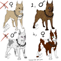 Pitbull points adoptables - CL by GreeNissy