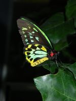 Butterfly 009 - HB593200 by hb593200