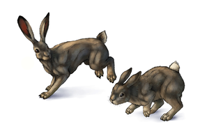 How to draw hares and rabbits by LadyAway